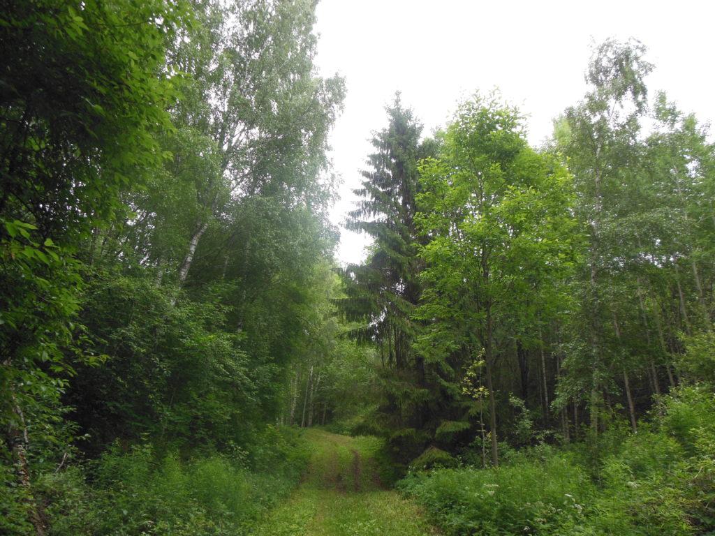 tunne oma metsast rõõmu!