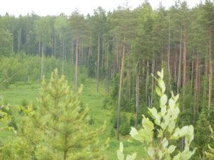 oma mets on väärtus