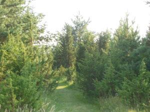 mets kui puhkeala