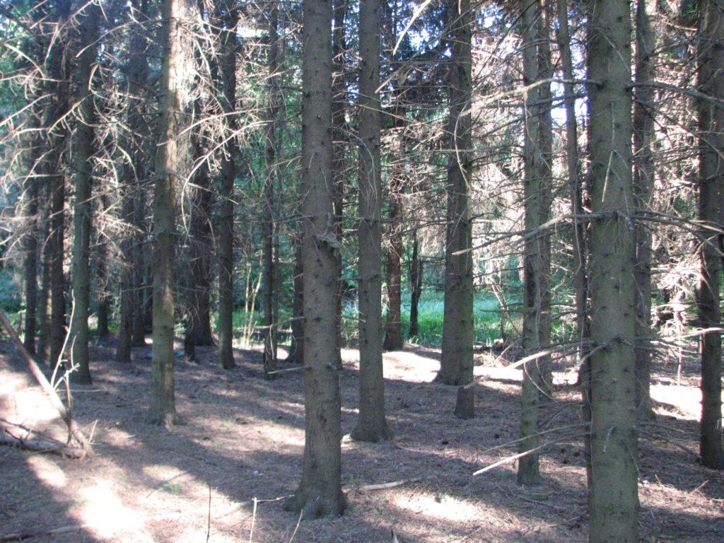 tundke oma metsast rõõmu