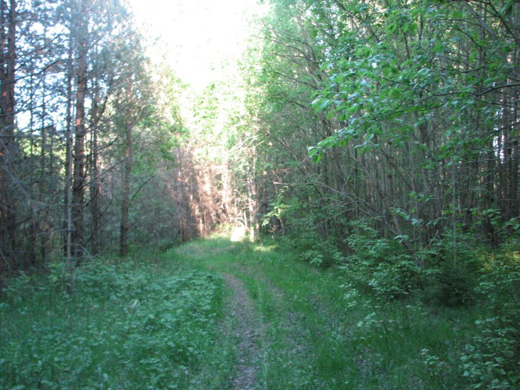 Puhka ja õpi metsas