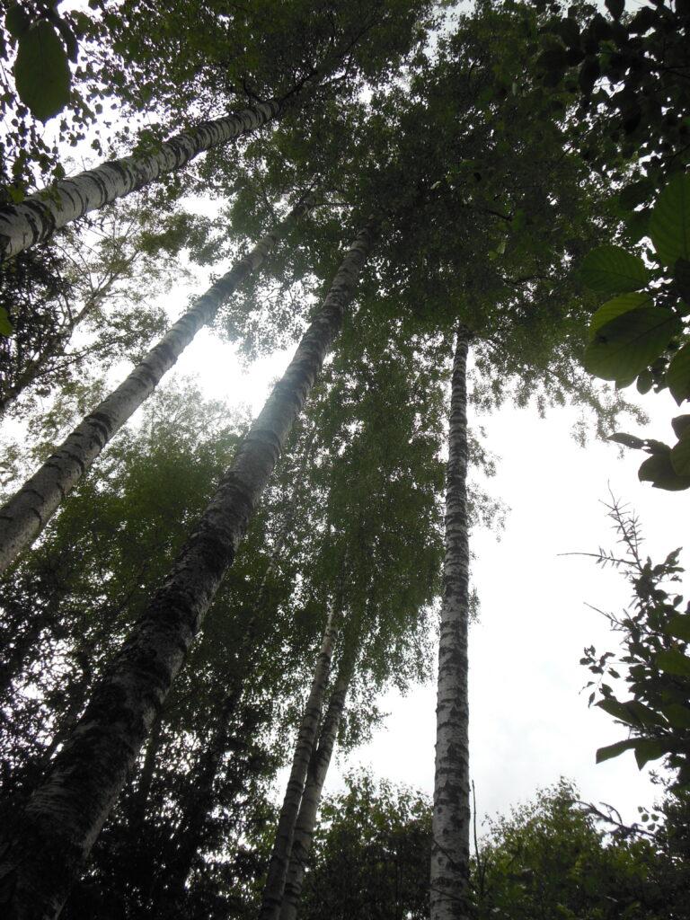 Loodushariduse õppeprogramm Viljandimaal