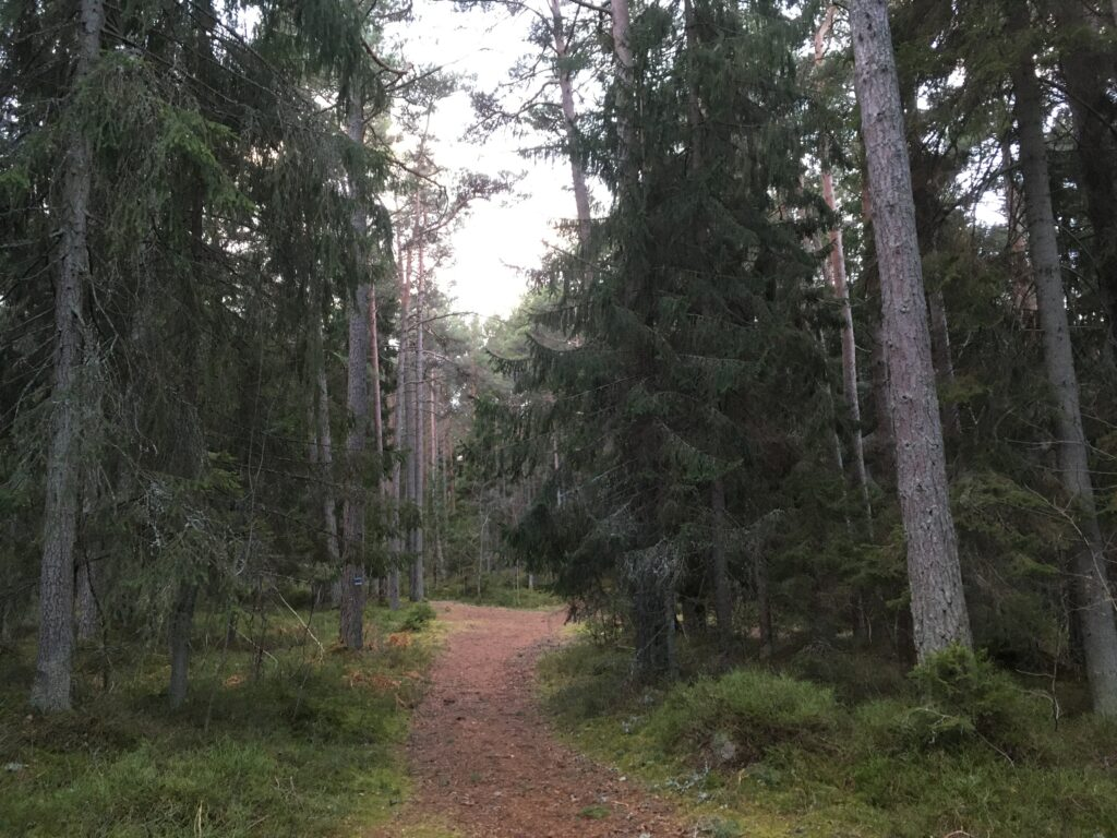 forest bathing in Estonia near Tallinn