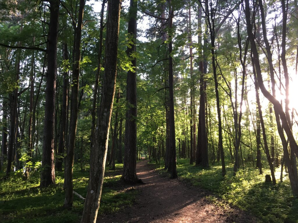 forest bathing in Estonia Pärnu