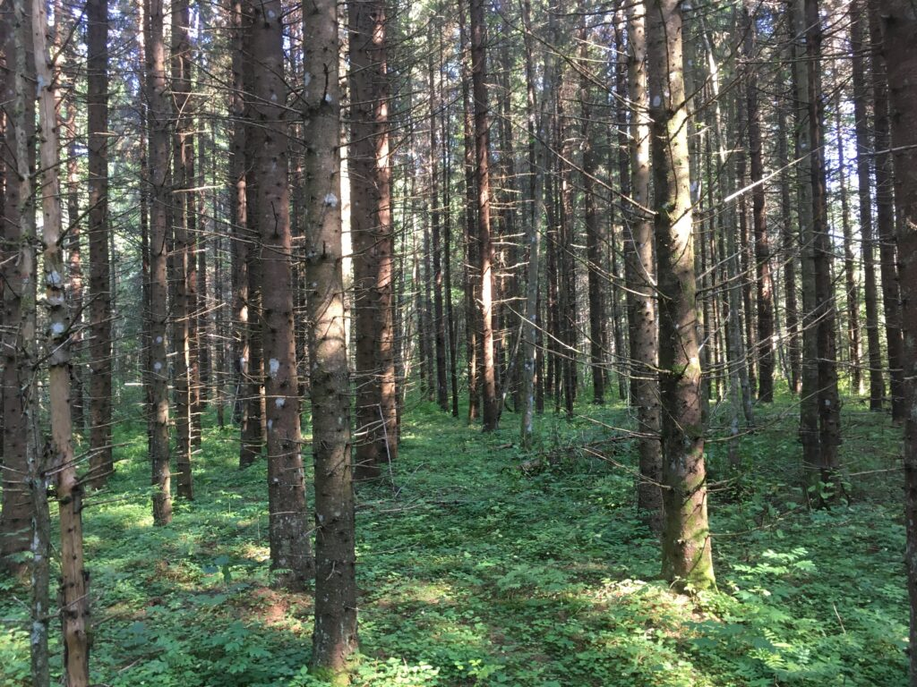 forest bathing in Estonia Virumaa
