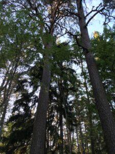 Metsafestival ja loodushääled