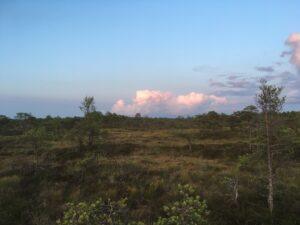 Väätsa raba - metsamatkad