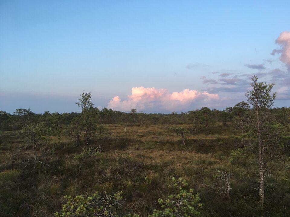 SelgeSiht - loodusharidus ja metsamatkad