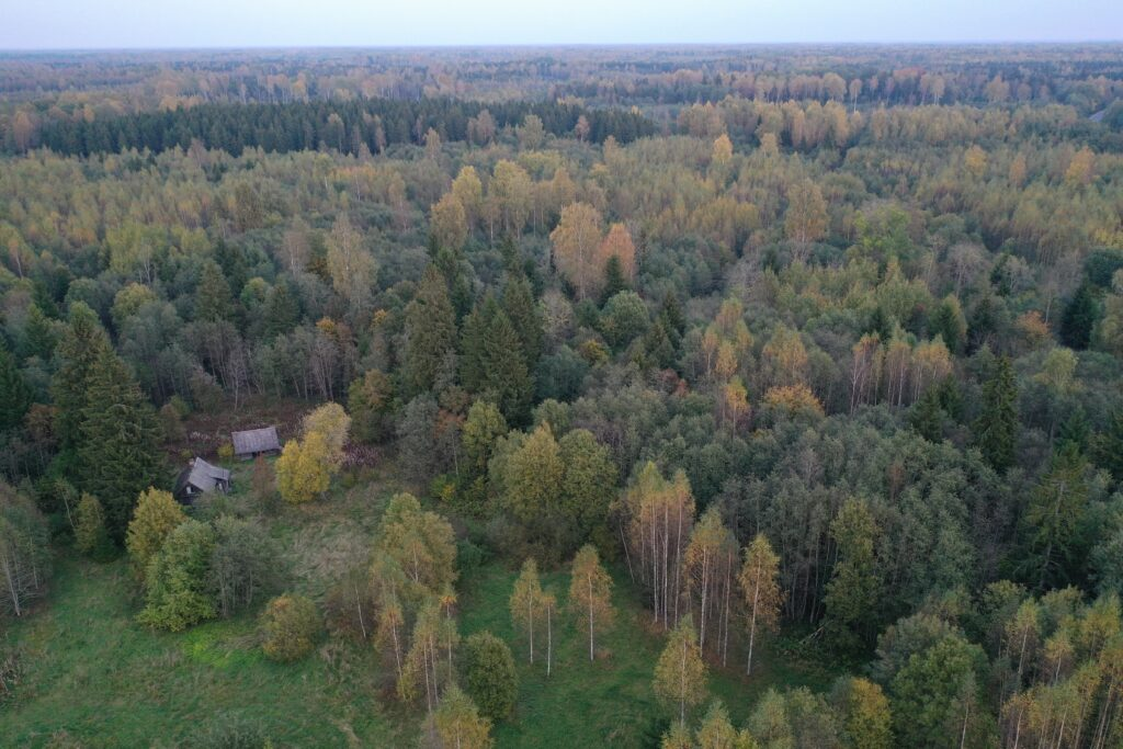 droonivaade - mets ja maja