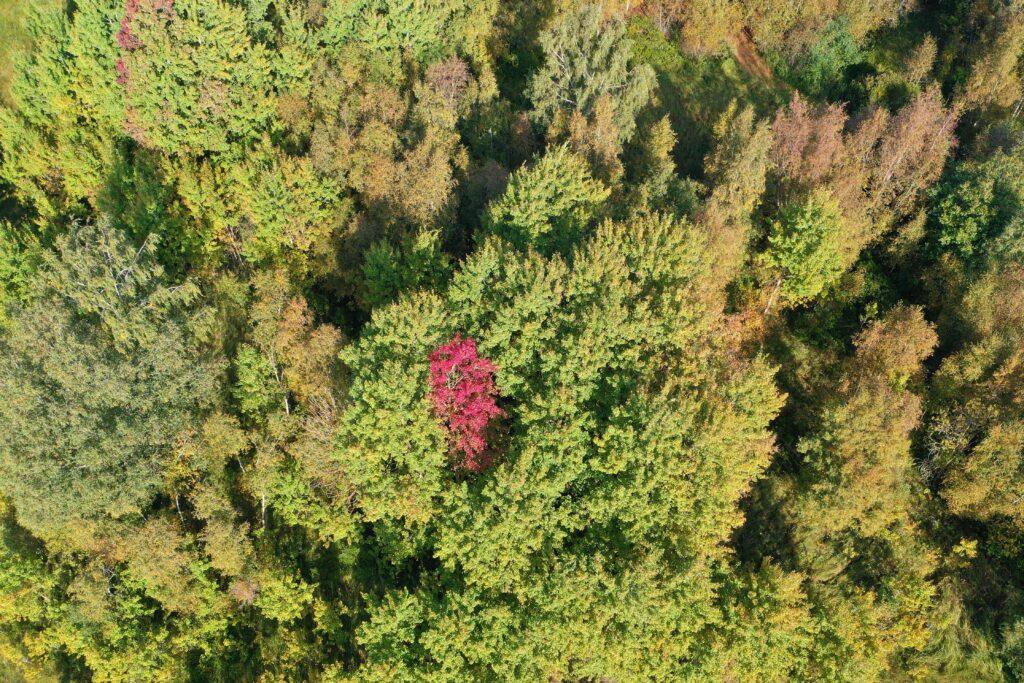 droonivaade - mets
