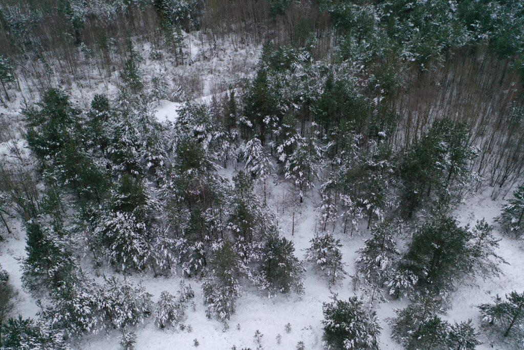 Lumine mets