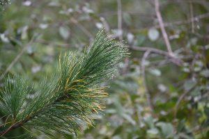 metsatunnetus looduses